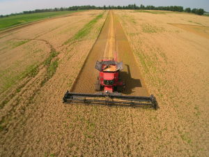 Wheat harvest captured by our drone pilot, Adam.