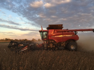 Another beautiful soybean evening.