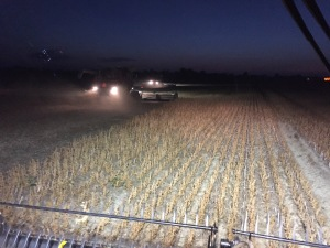 "Bean harvesting at ""Pikes Crossing"""